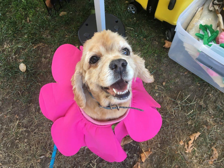 Menlo Park Mutt Strut Raises Awareness for Senior Dogs